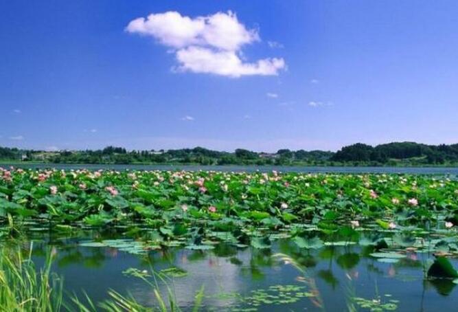 清明节微山湖跟团旅游攻略