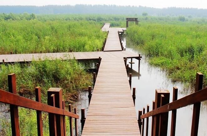 清明节微山湖有什么好玩的,有什么活动?