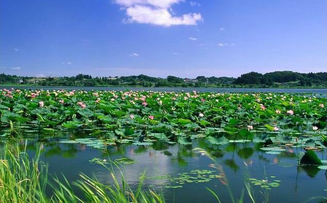2017清明节微山湖旅游攻略,微山湖红荷湿地攻略