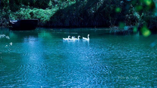 五一微山湖跟团旅游攻略,微山湖红荷湿地跟团攻略