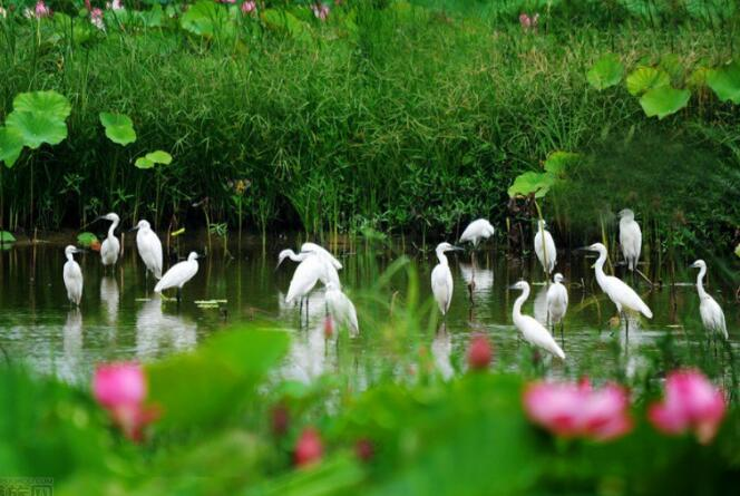 五一微山湖旅游注意事项,微山湖红荷湿地旅游注意事项