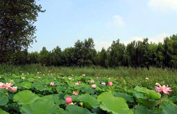 微山湖红河湿地攻略,微山湖红河湿地门票