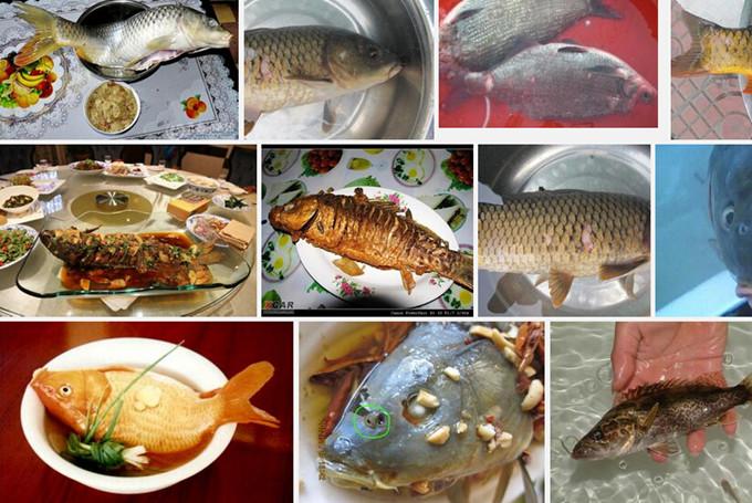 微山湖红河湿地攻略,微山湖红河湿地特色菜