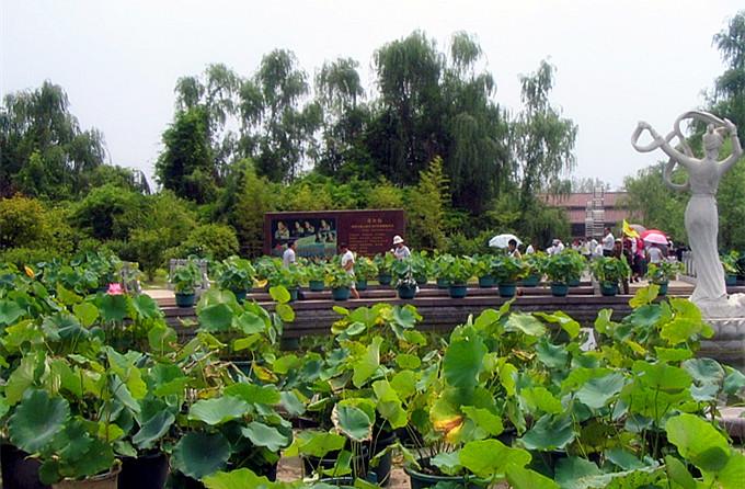 微山湖红荷湿地+墨子纪念馆二日游