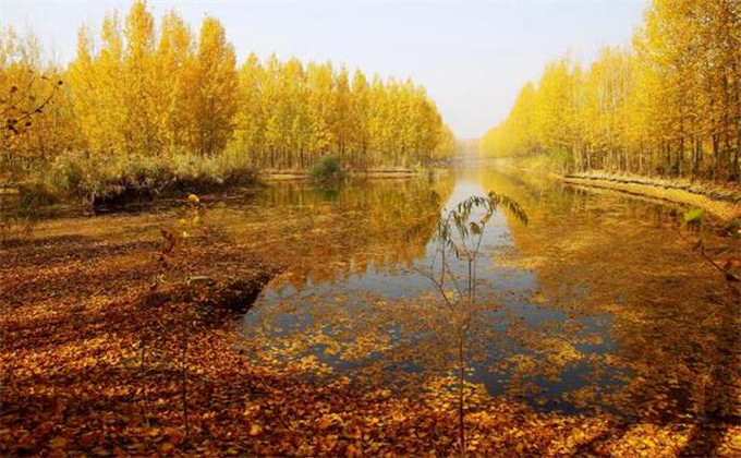 滕州微山湖湿地红荷风景区门票