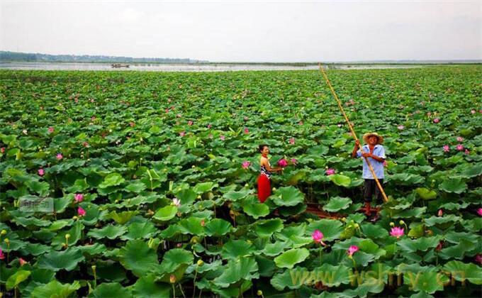 枣庄微山湖红荷湿地自助游多少钱