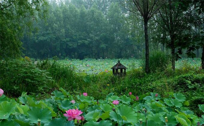 枣庄微山湖红荷湿地旅游门票团购