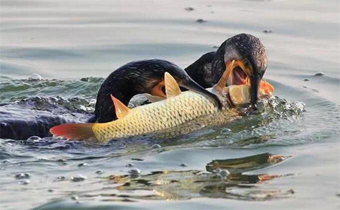 微山湖红荷湿地旅游攻略吃