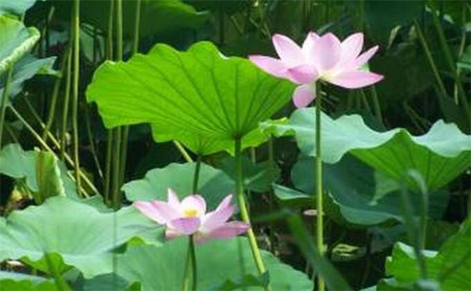 枣庄微山湖红荷湿地自由行团购