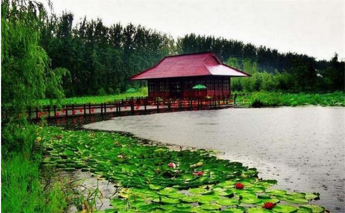 滕州火车站去微山湖红荷湿地