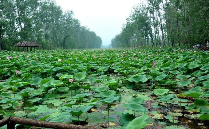 微山湖湿地一天能玩遍吗