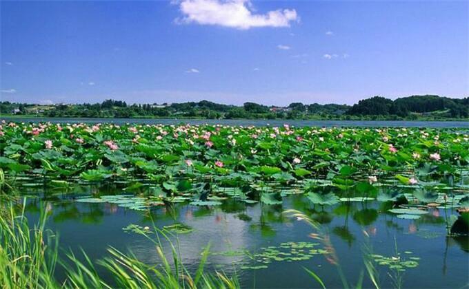 如何游览微山湖红荷湿地_怎么游玩
