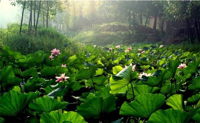 枣庄微山湖红荷湿地景区内交通