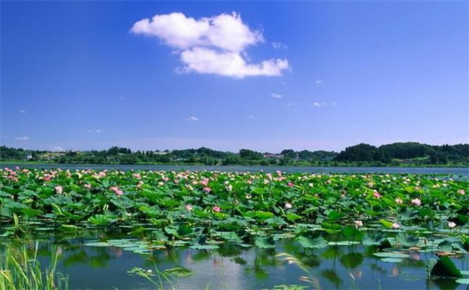 枣庄微山湖湿地附近住的地方
