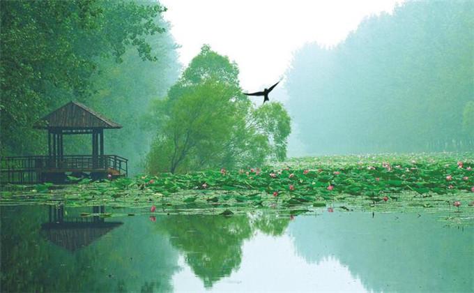微山湖红荷湿地在枣庄哪个高铁下