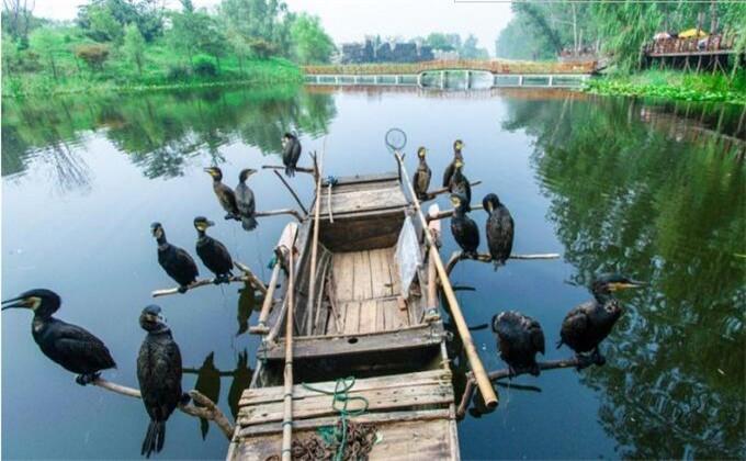 滕州微山湖湿地公园附近酒店有哪些