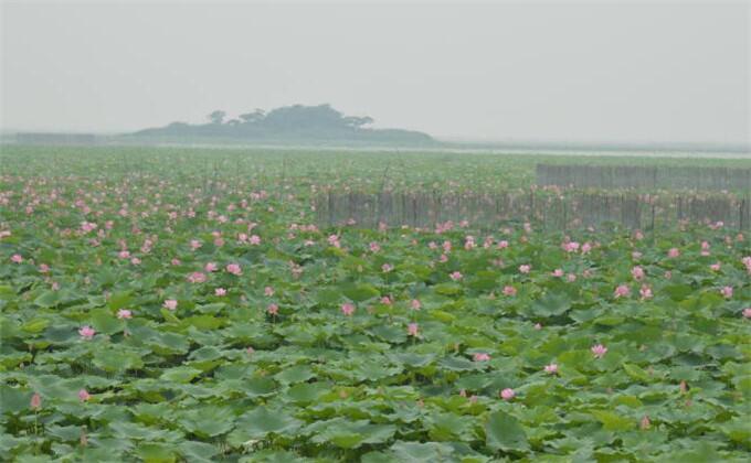 微山湖红荷湿地小吃有哪些
