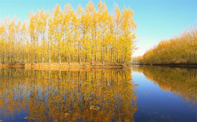 微山湖红荷湿地公园电话是多少