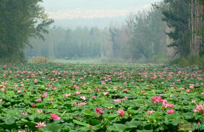 滕州微山湖红荷湿地门票多少钱