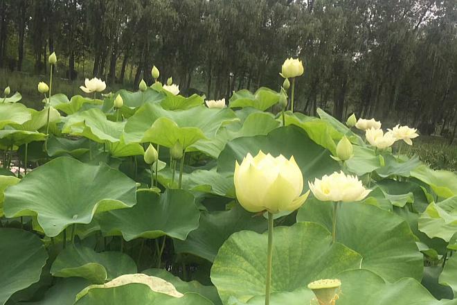 枣庄红色教育基地滕州微山湖红荷湿地