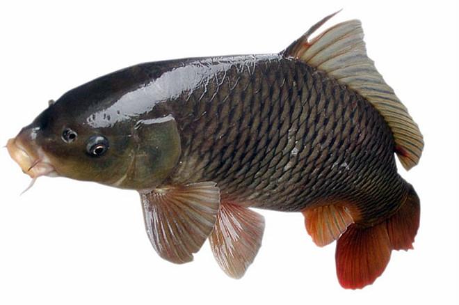 微山湖全鱼宴,微山湖红荷湿地特色小吃