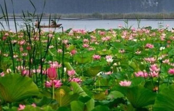 微山湖红荷湿地门票预定-微山湖景点