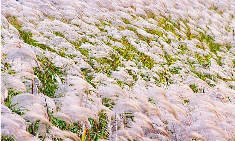 微山湖红荷湿地秋冬季门票便宜吗?