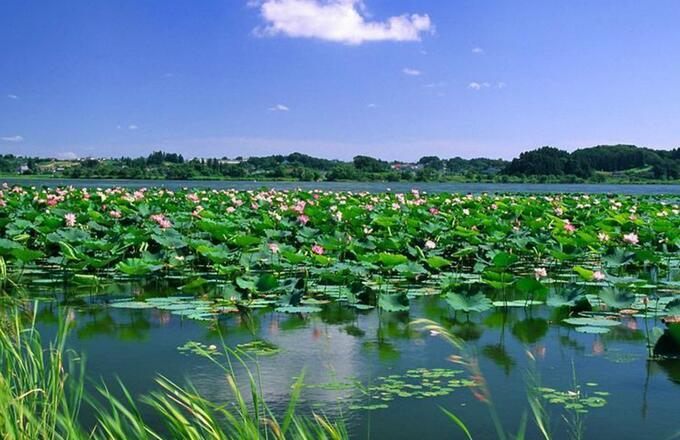 夏季自驾游-微山湖红荷湿地旅游住宿四星酒店预定