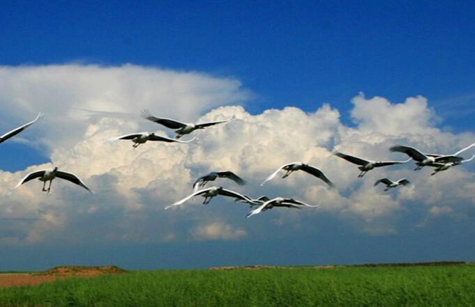 微山湖湿地公园与西溪国家湿地公园哪个湿地更有魅力