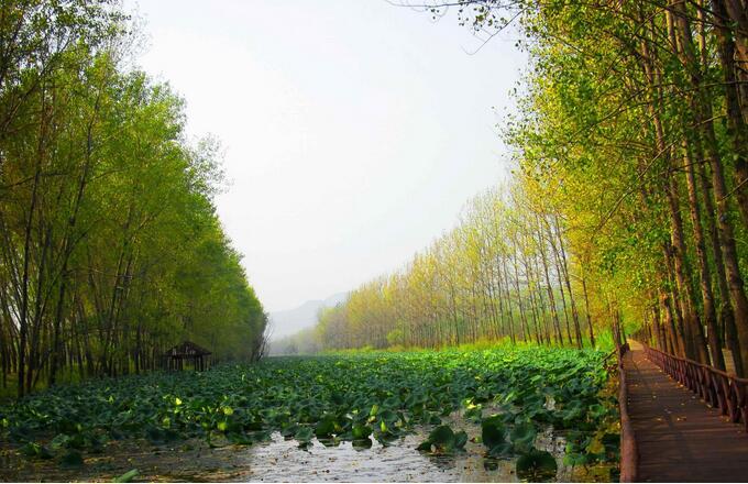 微山湖湿地旅游景点,微山湖湿地旅游,微山湖湿地