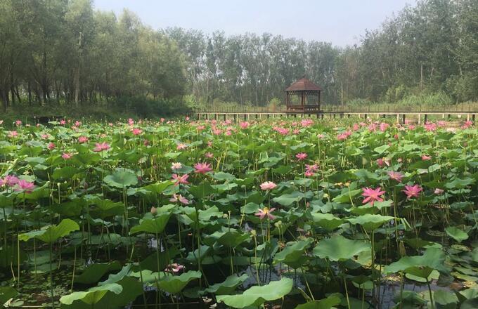上海游微山湖特产有哪些
