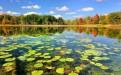 微山湖湿地公园秋冬季门票便宜吗?