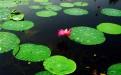 滕州微山湖湿地公园一天时间够用吗?多长时间适合?