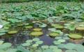 2019滕州微山湖红河湿地旅游住宿酒店预定哪里便宜?