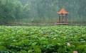 夏天去哪玩之微山湖湿地周边景点滕州盈泰温泉度假村