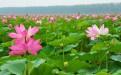 夏天去哪玩之微山湖湿地旅游景点之水生植物园