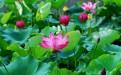 滕州微山湖湿地公园好玩的景点有哪些?