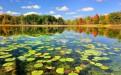 枣庄微山湖红荷湿地公园门票团购价格及团购方法