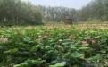夏天去哪玩之微山湖湿地周边景点滕州莲青山风景区