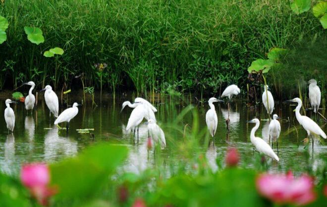 微山湖红荷湿地自由行住宿攻略及预订-微山湖景色