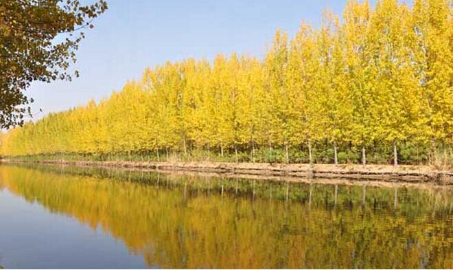 上海到微山湖自由行攻略,上海到微山湖红荷湿地自由行