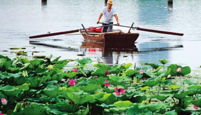 微山湖渔家乐简介,微山湖渔家乐预定及推荐