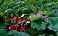 微山湖红荷湿地景区附近的农家乐或渔家乐