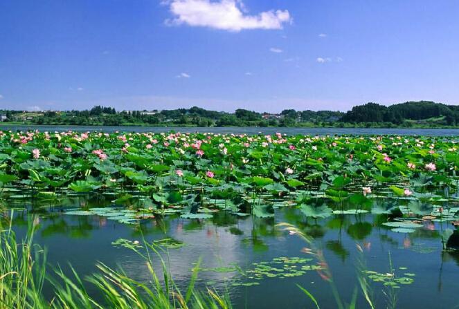 微山湖自驾游住哪儿好-蓝天