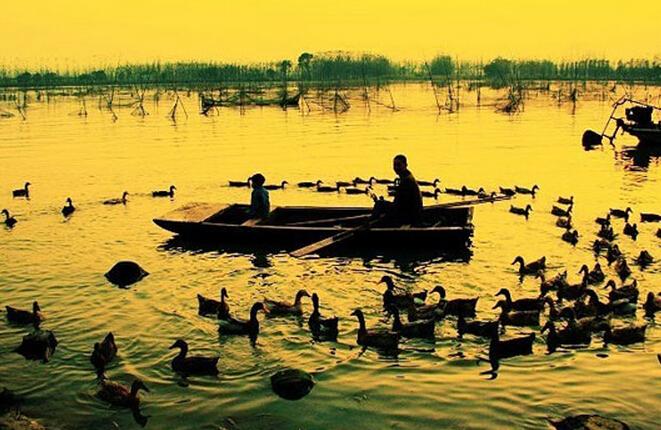 济宁到微山湖自驾游攻略-鸭子
