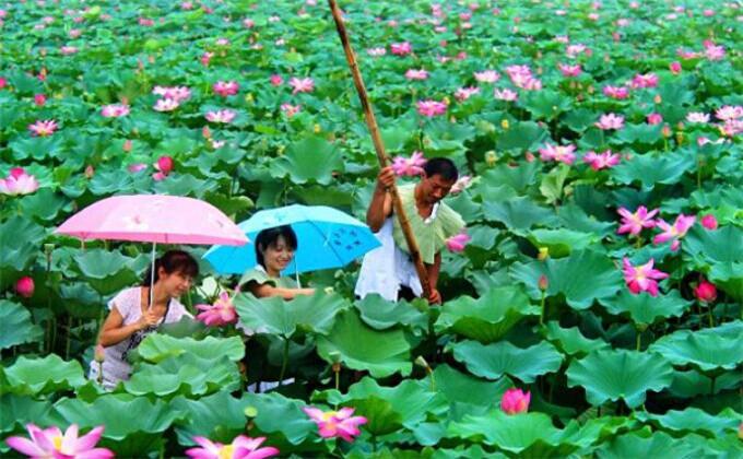 南京到微山湖自驾游攻略住宿有哪些