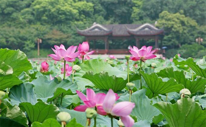 南京到微山湖自驾游攻略门票多少钱