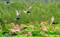 微山湖自驾游推荐旅游季节
